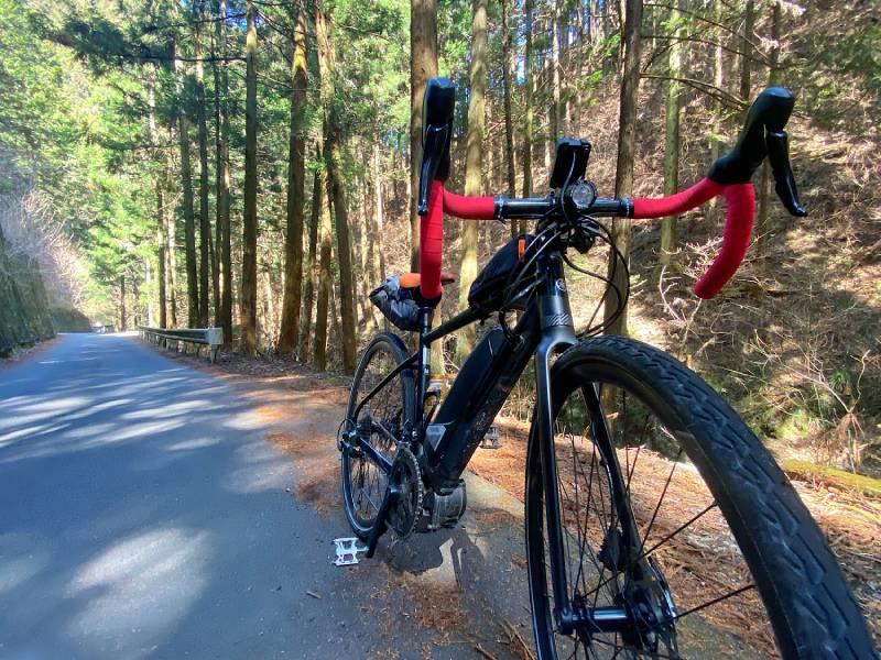 和田峠の杉林